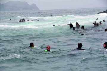 nadando-con-lobos-isla-palomino-peru